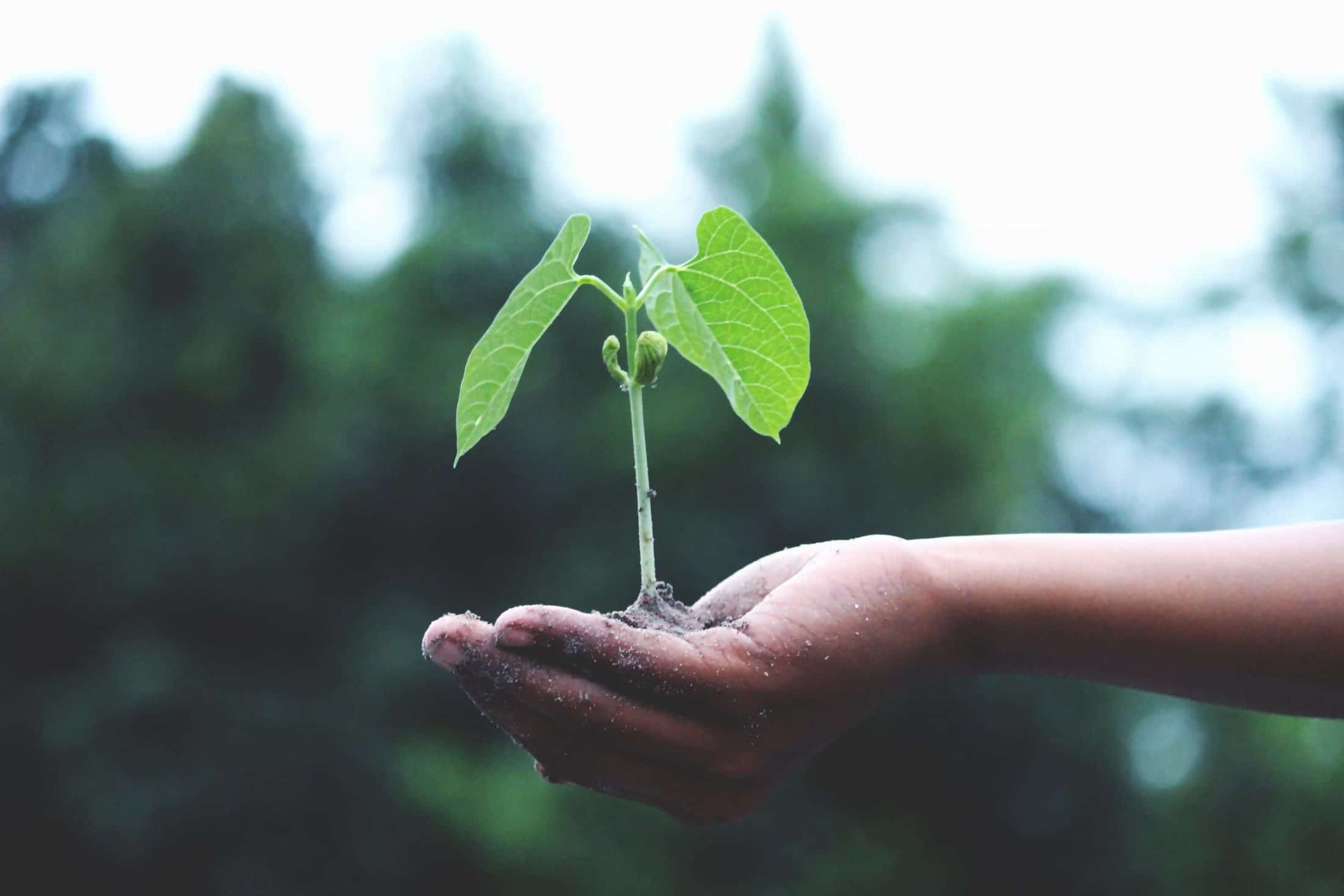 Growth and sustainability - WOIMA Corporation